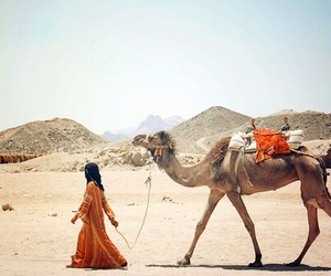 camel and arabic image