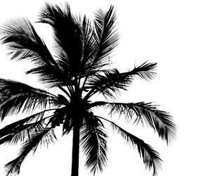 beach, beautiful, and palmera image
