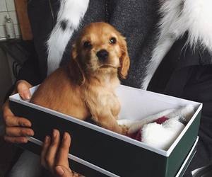 dog, gift, and puppy image