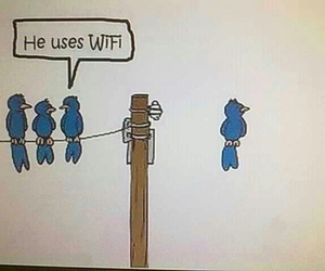 bird, wifi, and funny image