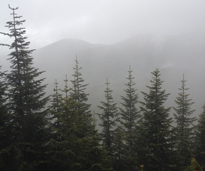 trees, forest, and fog image