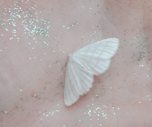 butterfly, pale, and glitter image