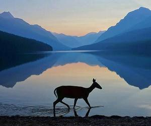 animal, deer, and lake image