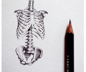anatomy, artsy, and book image