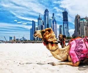 arab, beautiful, and fun image