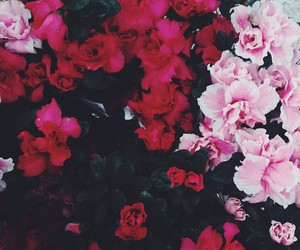 flower, hipster, and indie image