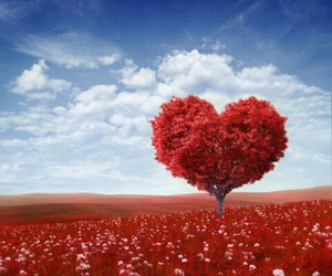 heart, red, and tree image