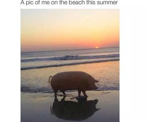pig, summer, and beach image