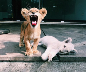 lion, animals, and brave image