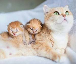 cat, kitten, and pets image