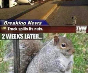 funny, squirrel, and nuts image