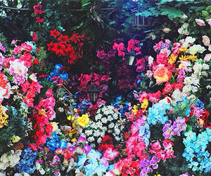 colour, flowers, and wonderland image