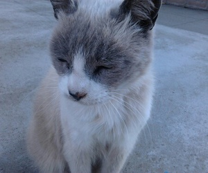 cat, animal, and pale image
