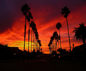 sunset, palm trees, and photography image
