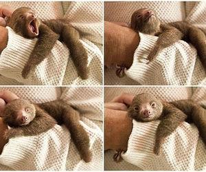 cute, animal, and sloth image