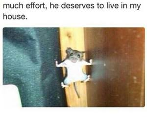 funny, mouse, and true image