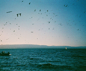 sea, bird, and vintage image
