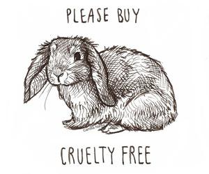 animal, cruelty, and vegan image