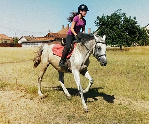 gallop, horseriding, and horses image