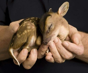 adorable, fawn, and cute image