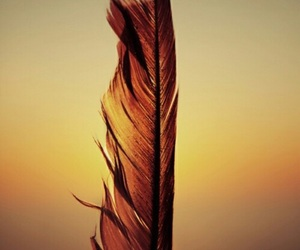 feather, indie, and sunset image