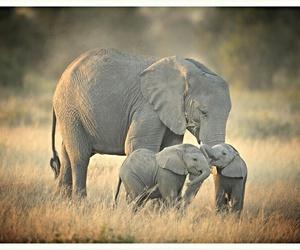elephant, beautiful, and animals image
