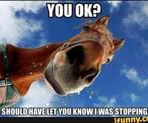 funny, horse, and cute image