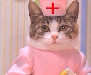 cat, pink, and nurse image