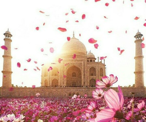 flowers and india image