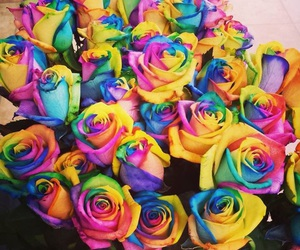 amazing, roses, and love image