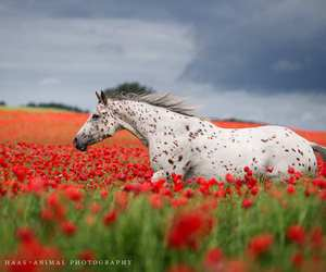 animal, inspiration, and photography image