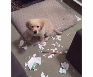 dog, funny, and homework image