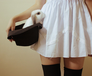 rabbit, bunny, and hat image