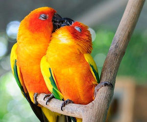 amor, beso, and colores image