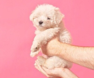 dog, cute, and pink image