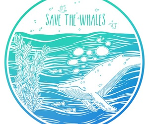 whales, save, and the image