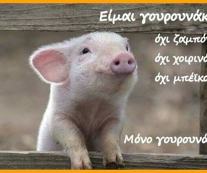pig, vegan, and vegetarian image
