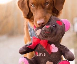 dog, valentine, and valentinstag image