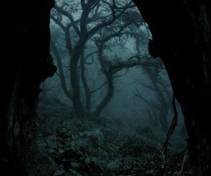 cave, dark, and forest image