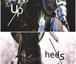 horse, equestrian, and dressage image