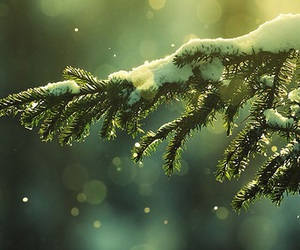 christmas, december, and green image