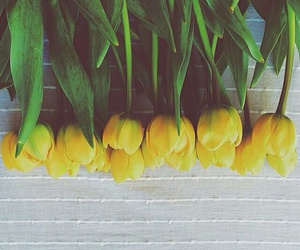 yellow, flowers, and tulips image