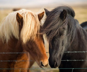 animal, horse, and love image