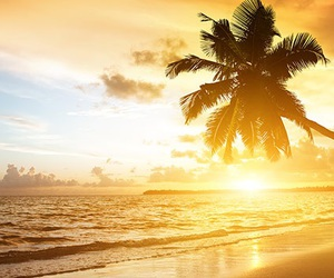 beach, paradise, and place image