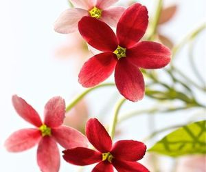 beautiful, red, and flower image