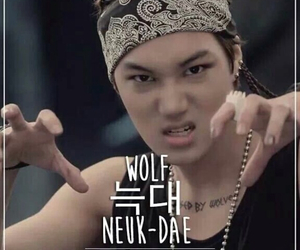 korean and wolf image
