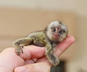 apes, cute animals, and baby animals image