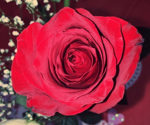 mine, roses, and kyra image