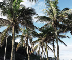 coconut trees and summer image