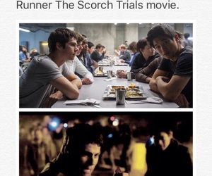 books, the scorch trials, and dylan o'brien image